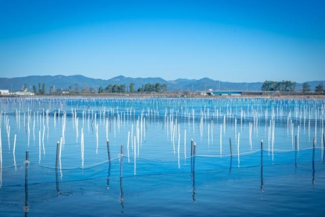 1. 浜名湖ののりの養殖場