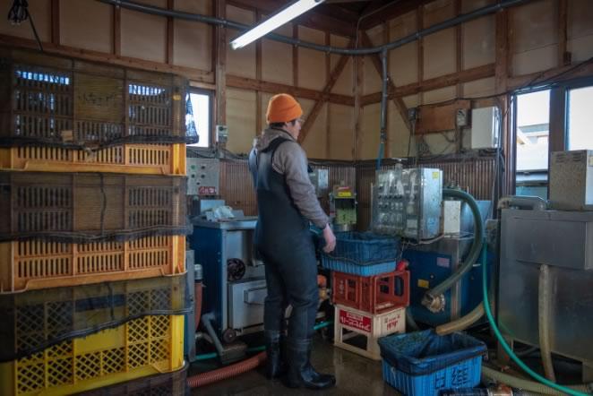 4. 工場にて洗浄や異物の除去、板海苔への加工などが行われます